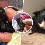 พลเมืองดีช่วยลูกแมว ติดน้ำมันจนขยับไม่ได้ ได้แต่ส่งเสียงร้องขอความช่วยเหลือ