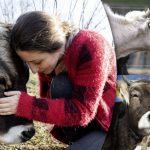 อาสาสมัครช่วยวัวออกจากฟาร์มฆ่าสัตว์ เพื่อให้พวกมันได้ใช้ชีวิตอย่างอิสระและปลอดภัย