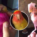 นกขนสวยกลายเป็นนกตัวโล้น แต่นางก็ยังยิ้มได้ เพราะมีครอบครัวคอยสปอยทุกอย่าง