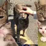 แม่แมวจรสุดแฮปปี้ที่มันและลูกน้อยมีคนพาไปอยู่บ้าน หลังเร่ร่อนบนถนนมาหลายปี