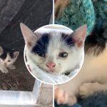 ลูกแมวถูกพบใกล้อู่ซ่อมรถ ได้รับการช่วยเหลือ และมีชีวิตใหม่ที่แสนสุขสบาย