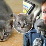 คุณตำรวจถึงกับปฏิเสธไม่ลง เมื่อลูกแมวจรตัวจิ๋ววิ่งมาหา และตัดสินใจเลือกเธอเป็นทาส…