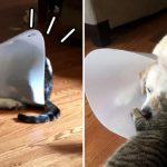 ชาวเน็ตพากันฮาท้องแข็ง เมื่อการใส่ลำโพงของหมา กลายเป็นความสนุกของแมว