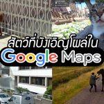 รวม 20 ความน่ารัก เมื่อเปิดชมวิวบน Google Map แล้วบังเอิญเจอสัตว์โผล่มาจ๊ะเอ๋