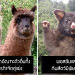มาดู 18 ความรู้รอบตัวฉบับสัตว์โลก ที่คุณน่าจะยังไม่รู้ เพราะว่ามันแปลกมากๆ!!