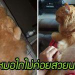 ทาสขอหมอไถขนแมวให้ แม้หมอจะนั่งยันนอนยันว่า 'ไถไม่สวย' ความฮาจึงบังเกิด