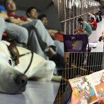 คนรักสัตว์ไม่ไปดูพลุเฉลิมฉลอง แต่มาที่ศูนย์ฯ เพื่ออยู่เป็นเพื่อนหมาแทน