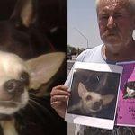 ชายแก่ทุ่มเททุกอย่างเพื่อหมาหาย 'ยอมยกบ้านให้' คนที่พาหมาหายกลับมาหาเขาได้