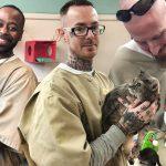 องค์กรช่วยเหลือสัตว์ จับเอาแมวจรจัด และนักโทษมาเจอกัน ทำให้ชีวิตทั้ง 2 ฝ่ายดีขึ้น