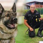 สุนัขตำรวจบาดเจ็บเพราะโดนมีดปักหัว ตอนนี้แข็งแรงพร้อมกลับมาปกป้อง ปชช. ต่อแล้ว