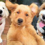 22 ภาพน้องลูกหมาสุดแบ๊ว ที่จะทำให้พ่อแม่ยอมให้คุณรับเลี้ยงเพื่อน 4 ขา อย่างง่ายดาย
