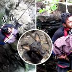 อาสาสมัครลงทุนโรยตัวลงไปในบ่อน้ำลึก เพื่อช่วยหมาเพียงตัวเดียวในนั้นออกมา