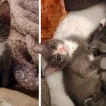 ลูกแมวขาบิดได้พบเพื่อนที่มีความผิดปกติเหมือนกัน ทั้งคู่จึงกลายเป็นคู่หูที่แยกจากกันไม่ได้
