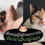 หนุ่มทำให้ 'ลูกแมวถูกทิ้ง' เปลี่ยนไปอย่างน่าทึ่ง โดยอาศัยคำแนะนำจากชาวเน็ต