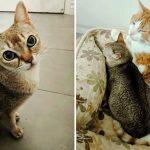เจ้าแมวหวั่นใจที่ถูกเจ้าของทิ้ง ยังดีมีแมวส้มตัวโตอยู่ข้างๆ ทำให้มันพอรู้สึกปลอดภัย