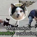 ครอบครัวสุดปลื้ม เมื่อพบว่ามีเด็กชายมาเล่นกับ 'แมวตาเดียว' ของพวกเขาทุกวัน