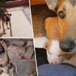 'แม่หมา' ท่าทีก้าวร้าว กลายเป็นตูบอ่อนหวานหลังรับเลี้ยง 'ลูกหมาถูกทิ้ง' 2 ตัว