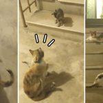หนุ่มเจอแมวจรเดินนำเขาไปหาลูกๆ ที่ซ่อนอยู่…ดูเหมือนมันจะเลือกเขาเป็นทาสแล้ว