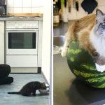 22 ภาพแมวเหมียวผู้น่ารักเกินต้านทาน ที่อาจเปลี่ยนหัวใจคุณเป็น 'วัตถุขนปุย' ได้