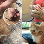 แมวน้อยถูกเชือกรองเท้ามัด ทำให้ระแวงกลัวคน แต่พอถูกช่วยมันก็เปลี่ยนไป