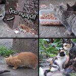 หนุ่มเรียกลูกแมวที่ซ่อนตัวในรู ออกมากินข้าว ปรากฏว่ามีน้องและแม่ตามมาด้วย