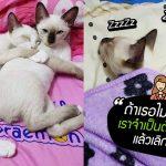 สาวทาสแมวย้ำกับแฟนหนุ่ม 'ถ้าเธอไม่รักแมวเรา เราจำเป็นต้องเลือกแมว แล้วเลิกกับเธอ'