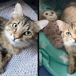 หญิงใจดีร่วมมือกับแม่แมว ช่วยมิ้วน้อยที่เหลือเพียงตัวเดียว ให้มีโอกาสเติบโตขึ้น