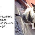 หนุ่มบอกความในใจถึงแมวตัวเอง ชาวเน็ตที่เห็นบอกเป็นเสียงเดียวกันว่าน่ารักโคตรๆ