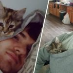 หนุ่มให้บ้านกับลูกแมว ตั้งแต่นั้นมาเขาก็ตื่นมาพร้อมอ้อมกอดน้อยๆ ของเจ้าเหมียวทุกเช้า