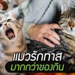 น้กวิทย์ฯ พิสูจน์แล้ว 'แมวรักทาสมากกว่าของกิน' มันไม่ได้เห็นเราเป็นเครื่องให้อาหาร!!