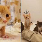 'ลูกแมวถูกทิ้ง' หยุดร้องไห้ เมื่อได้พบกับพี่น้องต่างแม่ ไม่ต้องโดดเดี่ยวอีกแล้ว