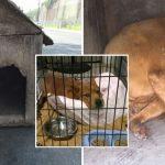 สุนัขถูกขังในบ้านหมาปิดตาย พลเมืองดีรุดเข้าช่วย และสอนให้รู้จักความรักที่แท้จริง