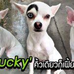 พบกับ 'Lucky' นุ้งหมาตาสองสีแถมคิ้วโก่ง แม้จะมีข้างเดียว แต่ก็แย่งซีนทุกคนได้
