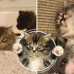 ลูกแมวเกิดมาพร้อมภาวะผิดปกติ แต่มันใช้ชีวิตอย่างแฮปปี้ได้ เพราะมีคนมอบความรักให้