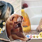 21 ภาพน้องหมาแสนดีทำหน้าเศร้าในวันที่เจอเรื่องแย่ๆ จนเรารู้สึกเศร้าตามไปด้วย