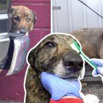 สุนัขร้องด้วยความกลัวเมื่อมีคนจะมาช่วย แต่เมื่อเห็นถึงความใจดีของพวกเขา มันก็สงบลง