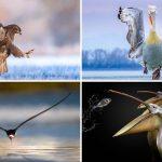 20 ภาพนกที่ดีที่สุดแห่งปี 2019 โดยช่างภาพทั่วโลก งดงามราวกับหลุดมาจากเทพนิยาย