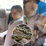 ครอบครัวยกย่องให้เจ้าหมาเป็นฮีโร่ หลังมันเสี่ยงชีวิตโดนงูกัดแทนเด็กหญิงวัย 7 ขวบ