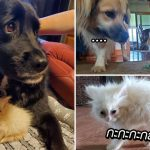 แมวตัวน้อยหัวใจใหญ่ โชว์ความเหนือใส่สัตว์ทุกตัวที่เจอ จนกระทั่งได้หมามาเป็นทาส