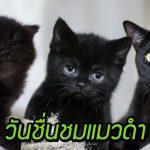 """เชิญรับความสดใสจากแมวดำ ในโอกาส """"17 สิงหาคม วันชื่นชมแมวดำ"""" กันเถอะ"""