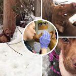 หมาน้อยนั่งขดตัวบนหิมะใต้เสาไฟฟ้า พยายามร้องขอความช่วยเหลือ จนมีพลเมืองดีมาเห็น