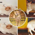15 ภาพการนอนของแมว พิสูจน์ให้เห็นว่า 'การซื้อเตียงให้แมว ไร้ประโยชน์สิ้นดี'
