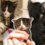2 แมวน้อยถูกทิ้งเหมือนกัน เมื่อมาเจอกัน พวกมันจึงกลายเป็นพี่น้องต่างแม่ที่รักกันมาก