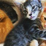 แมวจรจัดขี้เหงาเคยอยู่ตามลำพัง รู้สึกสุขใจเมื่อมีเพื่อนใหม่ให้กอด ไม่ยอมห่างเพื่อนเลย