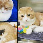 ลููกแมวจรร่างกายอ่อนแอ อาการไม่ดีขึ้นเลย แต่พอได้พี่แมวช่วยดูแลมันก็แข็งแรงขึ้น