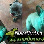 เหล่าบูลด็อกอาศัยช่วงแม่เผลอ แอบเข้าไปเล่นสีผสมอาหาร กลายเป็นสีเขียวทั้งแก๊ง!!