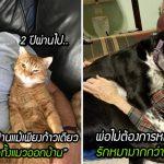 รวมภาพคนที่ 'ไม่อยากให้มีสัตว์เลี้ยงในบ้าน' แต่วันนี้กลายเป็นคนขาดสัตว์เลี้ยงไม่ได้