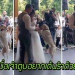 เจ้าตูบมอบของขวัญพิเศษ ให้พ่อกับแม่ในวันแต่งงาน ด้วยการ 'ร่วมเต้นรำ' กับพวกเขา