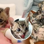 ลูกแมว 5 ตัวถูกช่วยจากท่อระบายน้ำ หนึ่งในนั้นเหมือนจะไม่รอด แต่มันไม่เคยยอมแพ้