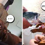 23 ภาพปฏิกิริยาของสัตว์โลกเมื่อเจอเพื่อนต่างสายพันธุ์… เก็บอาการหน่อยก็ได้ลูก